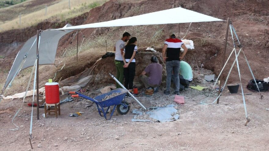 7 türe ait 104 fosil bulundu