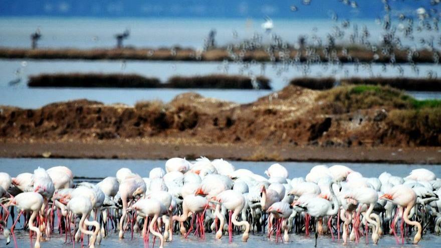 Flamingo cennetini çöl haline getirir