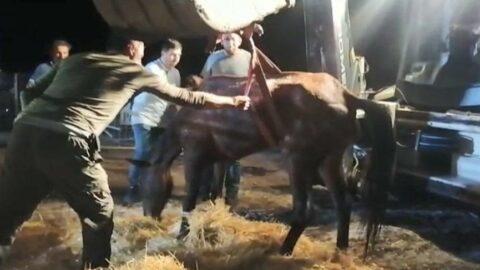 Hopa'da bir skandal daha! Atları yine ölüme terk ettiler!