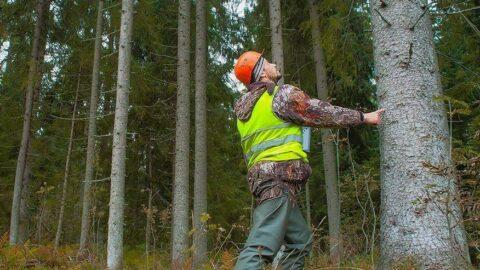 Orman Genel Müdürlüğü'nün paraları tanıtım işlerine gitti