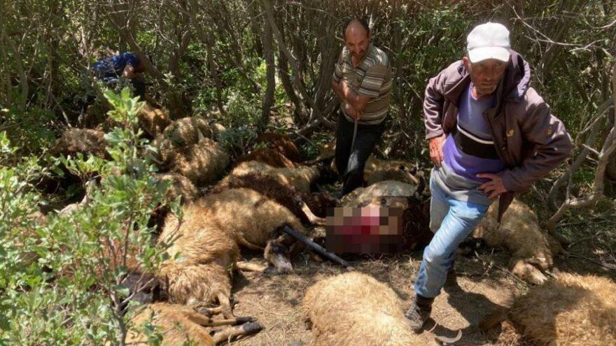 Ayılardan ürküp kaçan koyunlar derede öldü
