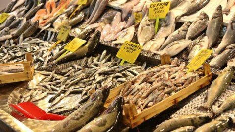 Balıklar tezgahlarda yerini aldı: Hangi balık nerede, ne kadar?