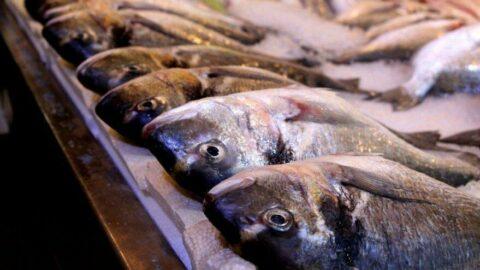 Eylül ayında hangi balık yenir? Hangi balık, hangi ayda lezzetlidir?