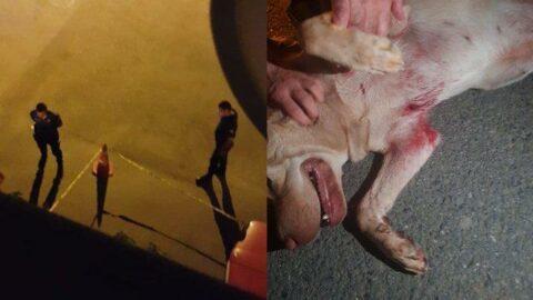 İstanbul'da köpeğe kurşun yağdırdı: Seken mermi 10 yaşındaki çocuğa isabet etti