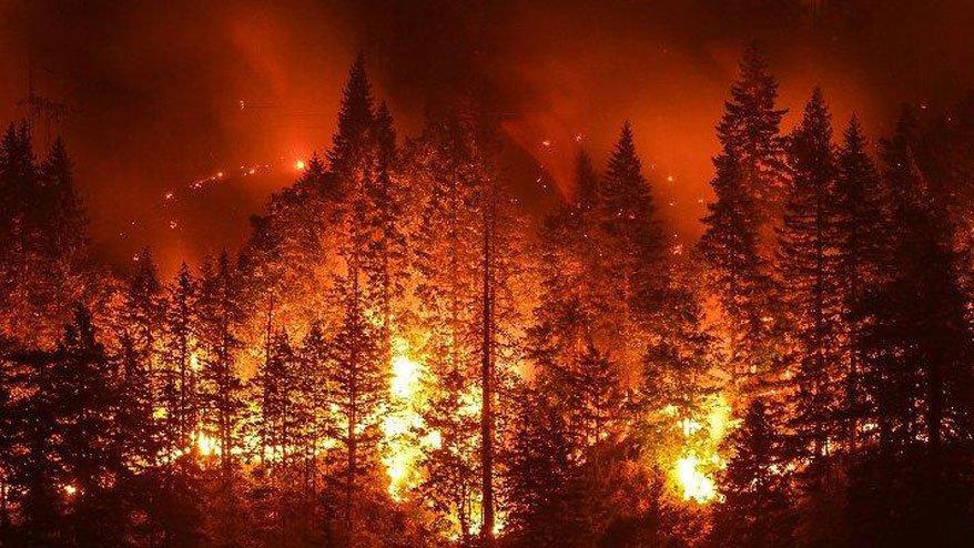 15 yılda 148 bin 3 haftada 137 bin hektar yok oldu