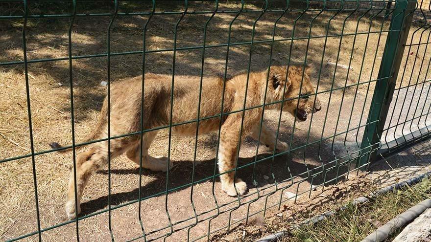Mahallede hayvanat bahçesi açıldı, mahalleli gazeteye ilan verdi