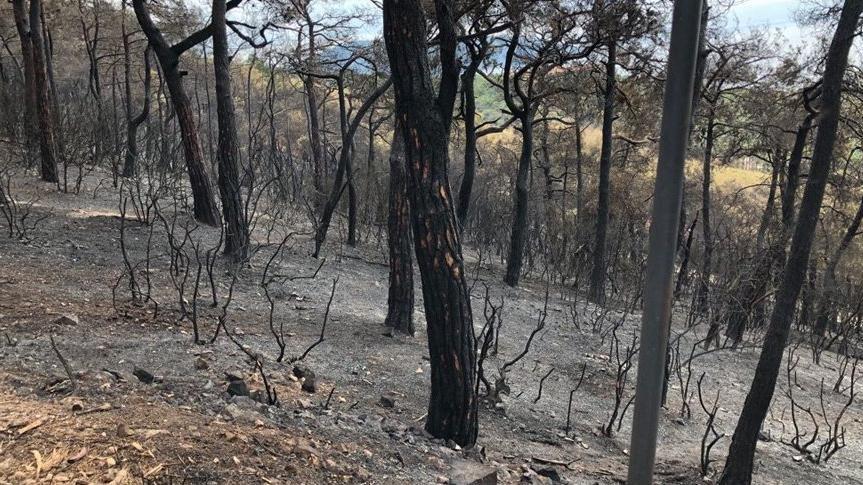 İstanbul'da ormanlara girme yasağı uzatıldı