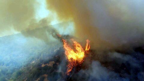 Bodrum'daki yangın evlerin bahçesine kadar girdi, son anda kontrol altına alındı