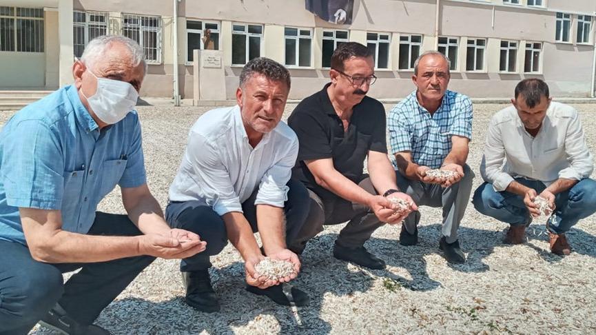 CHP'li Sarıbal: Çerezlik ayçiçeği fiyatı yüzde 50 düştü