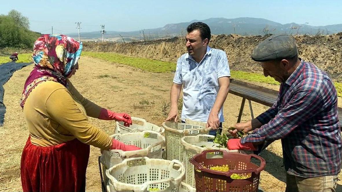 Elektrik borcunu ödeyemeyen çiftçi sıkıntıda
