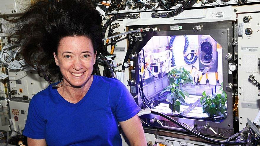 NASA astronotunun yetiştirdiği biber fideleri çiçek açtı