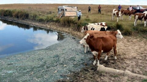 Gölette binlerce balık öldü, kirleten işletmeye 96 bin lira ceza kesildi