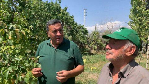 Akdeniz Meyve Sineği bahçeleri vurdu