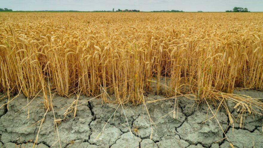 Merkez Bankası: Kuraklık gıda fiyatlarını olumsuz etkiliyor