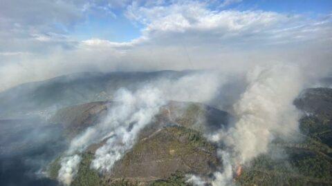 İspanya'da 1500 hektar ormanlık alan küle dündü