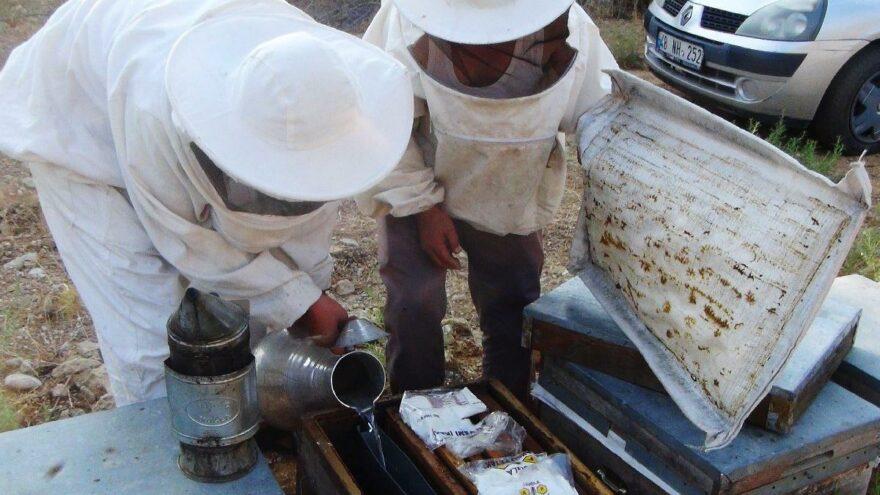 Muğla'da yangınlar çam balına darbe vurdu: Üreticiler arıları hayatta tutmaya çalışıyor