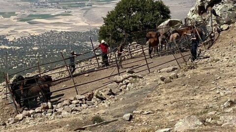 40 yılkı atını izinsiz toplayan 3 Kırgız uyruklu şahıs yakalandı