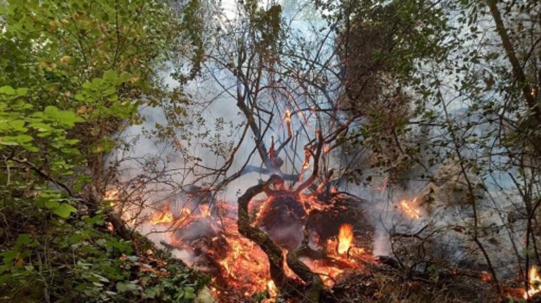 Eyüpsultan'da ormanlık alanda yangın