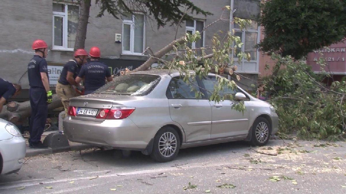 Bakırköy'de şiddetli rüzgarda ağaç devrildi: Yaşlı kadın yaralandı