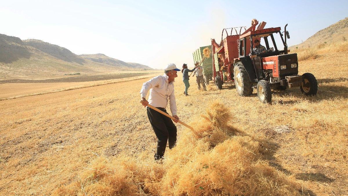 Çiftçiden esirgenen alım fiyatı ithalata mecbur bıraktı