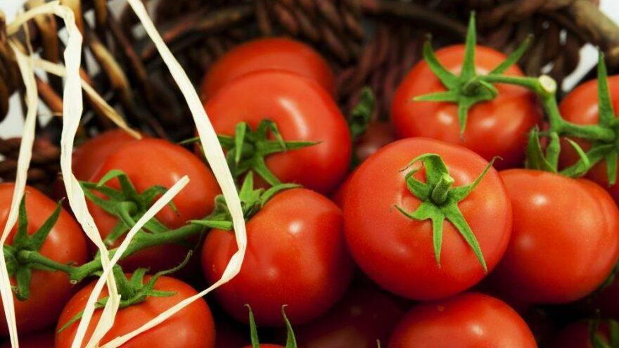 Rusya'ya domates ve biber ihracatındaki analiz zorunluluğu kaldırıldı