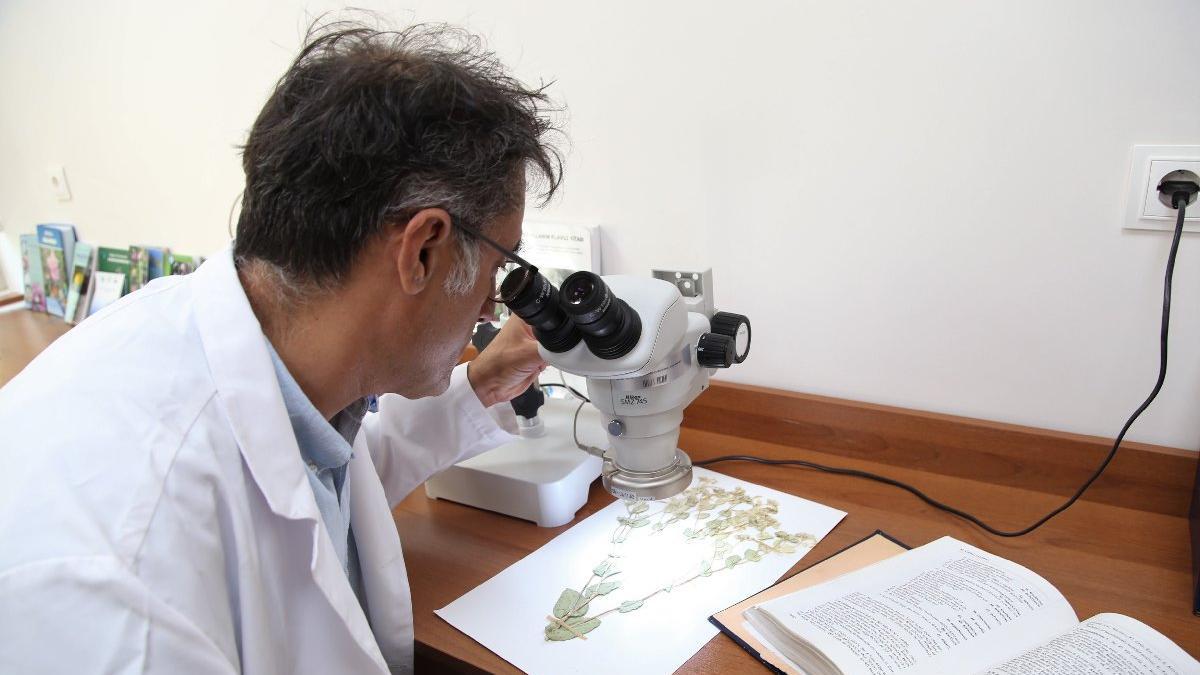 Sivas'ta yeni bitki türü keşfedildi, ismini profesörden aldı