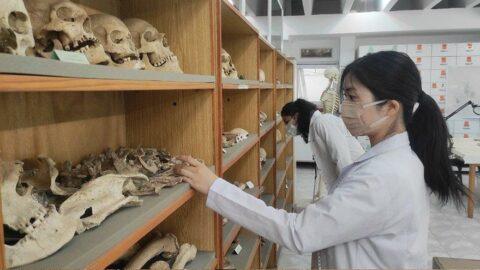 Antik DNA analizleri tarihe ışık tutuyor