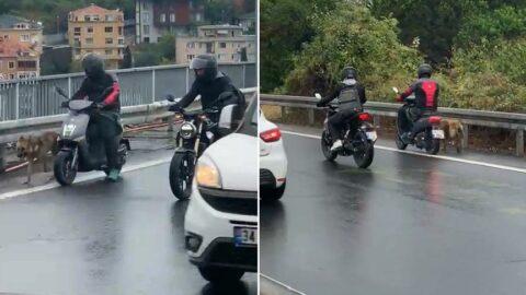 Köpeğe araçların çarpmaması için motosikletlerini siper ettiler