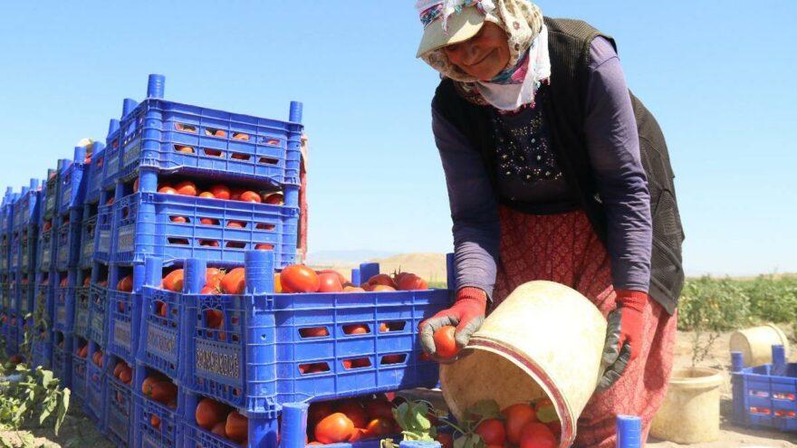 Çileyi çeken üretici, parayı kazanan aracı: Tarla ve market arasında 5 kat fark