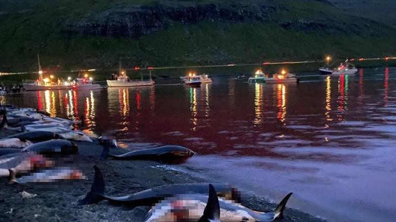 Katliam gibi festival: 1428 balina ve yunus öldürüldü