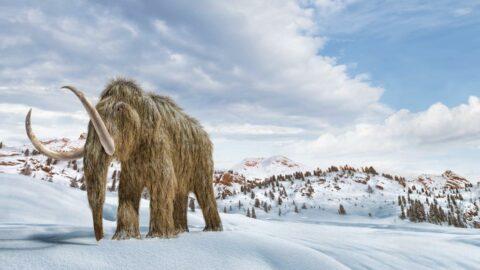 Mamutlar geri geliyor! Bilim insanlarından sıra dışı hamle