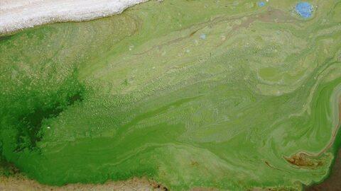 Atatürk Barajı'nda suyun rengi değişti!