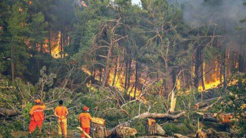 Yanan 404 bin ağaç satışa çıktı