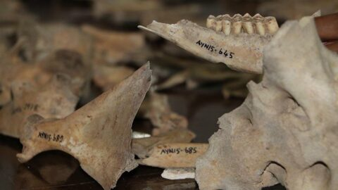 Ayanis Kalesi'nde çöplük kazısı: 'Sonuçlar çok çarpıcı'