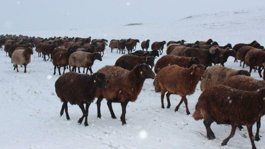 Doğuda kış başladı, koyun sürüsü tipiye yakalandı