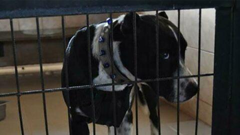 Sokak köpeğine saldıran pitbull sahiplerine 28 bin tl ceza
