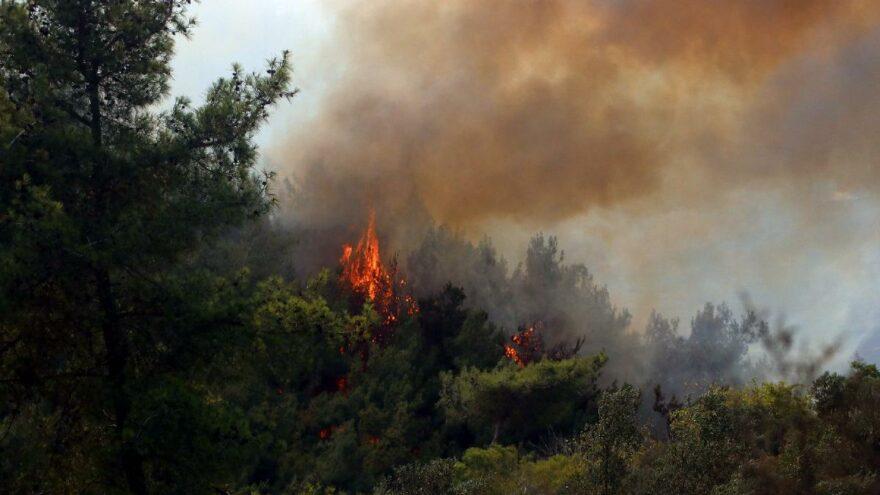 YPG/PKK'lı teröristten orman yangınlarıyla ilgili itiraf