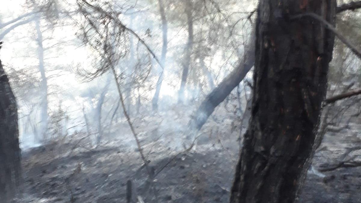 Tekirdağ'da orman yangını