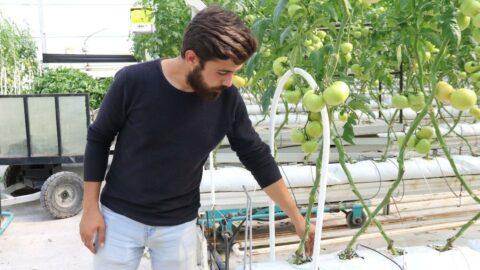 Sıcak su ile yıllık 1200 ton domates üretiyor