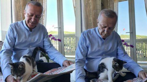 Erdoğan 'güncel gelişmelere pek meraklı' notuyla paylaştı