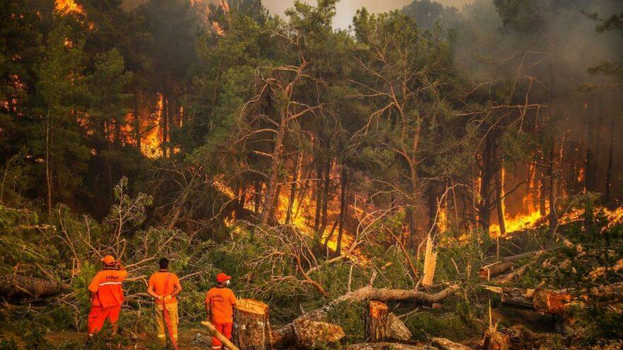 30 milyon yanmış ağaç kesilecek