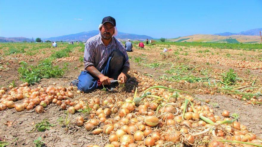 Kayrılan Türk değil yabancı çiftçi oldu