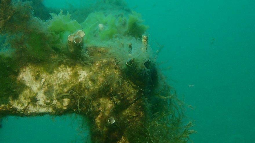 Mersin sahilleri müsilaj tehlikesi altında
