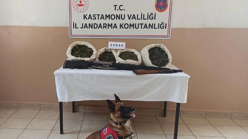 Evinde uyuşturucu yetiştiren kişi tutuklandı