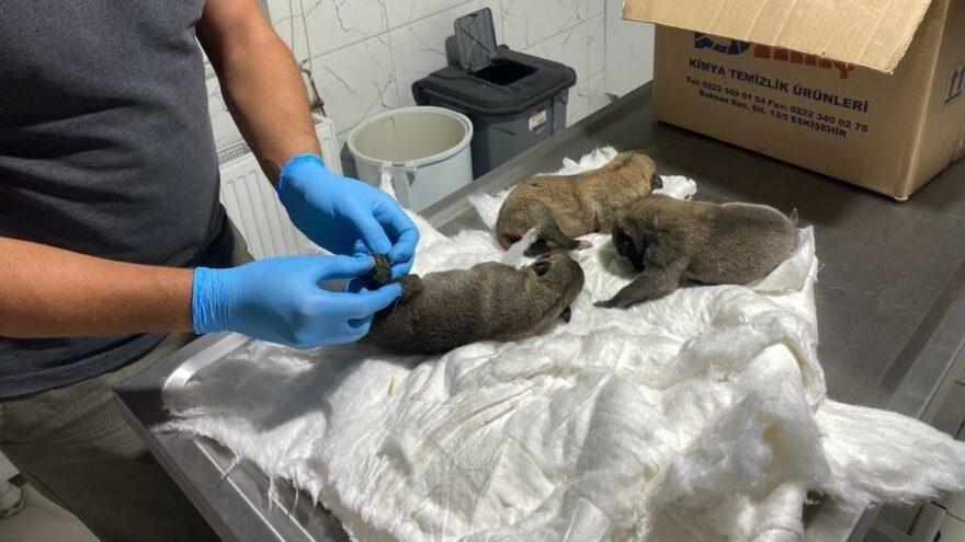 Ölüme terk edilen köpek yavruları kurtarıldı