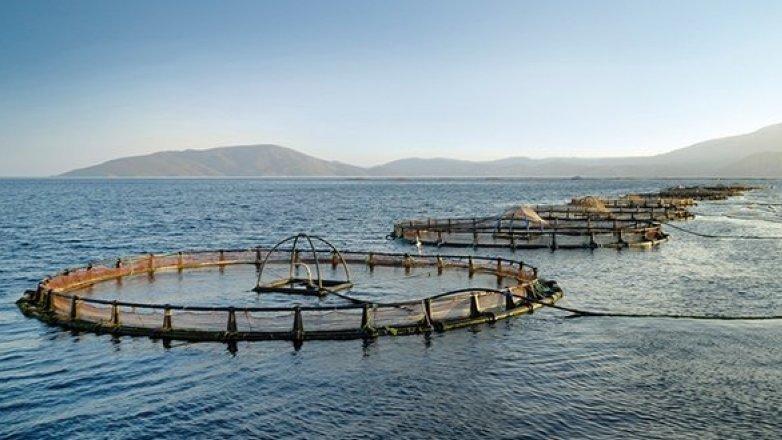 Mersinli çevrecilerden balık çiftliklerine tepki: İstemiyoruz