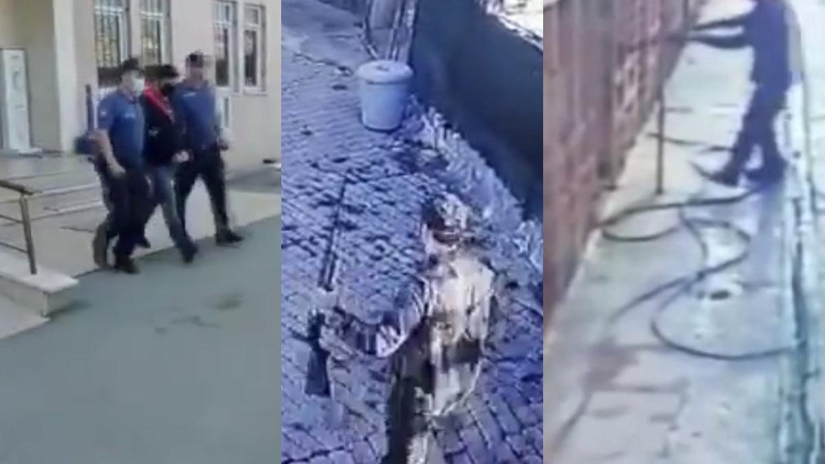 Köpeği kavga ettiği için öldürmüş!