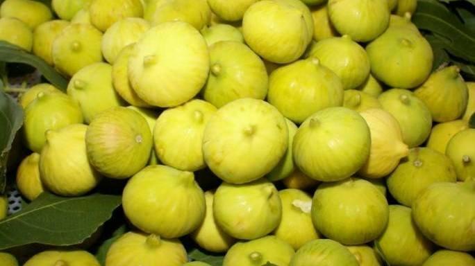 Kuraklık inciri de vurdu: Rekolte kaybı yüzde 70'i buldu