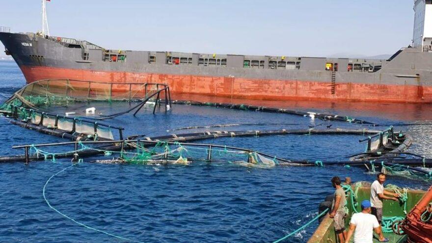 Kuru yük gemisi balık çiftliği havuzlarına çarptı: 750 bin balık denize kaçtı