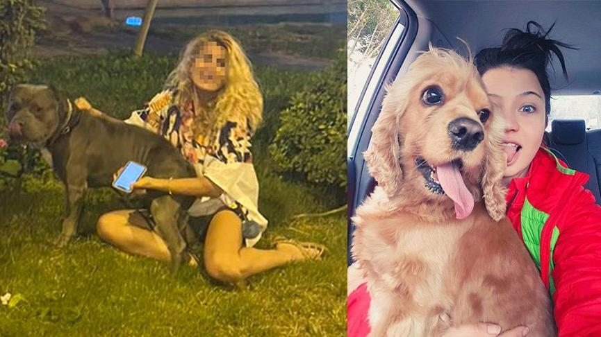 Tasmasız dolaştırılan pitbull saldırdığı köpeği öldürdü